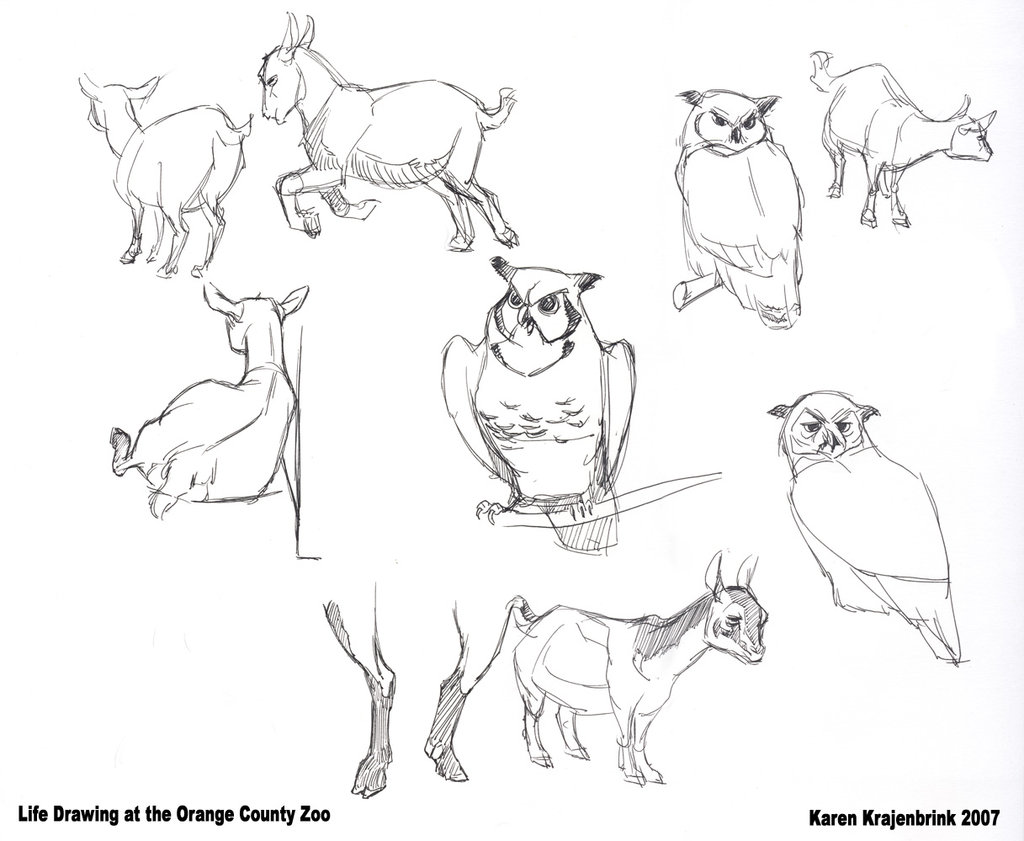 1024x841 Zoo Drawing Goats And Owls By Kayjkay