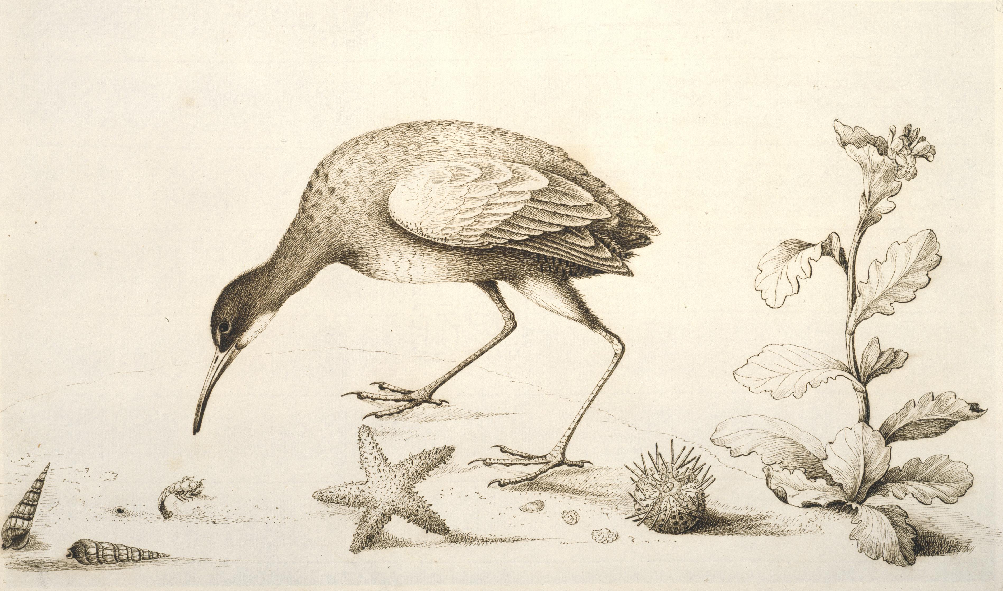 Zoology Drawing At Getdrawings