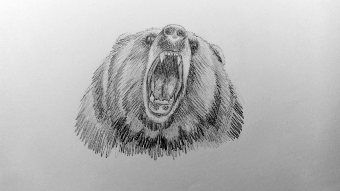 How to draw a Bear?