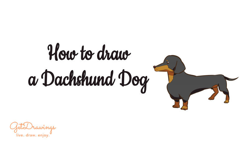 How to draw a Dachshund dog?