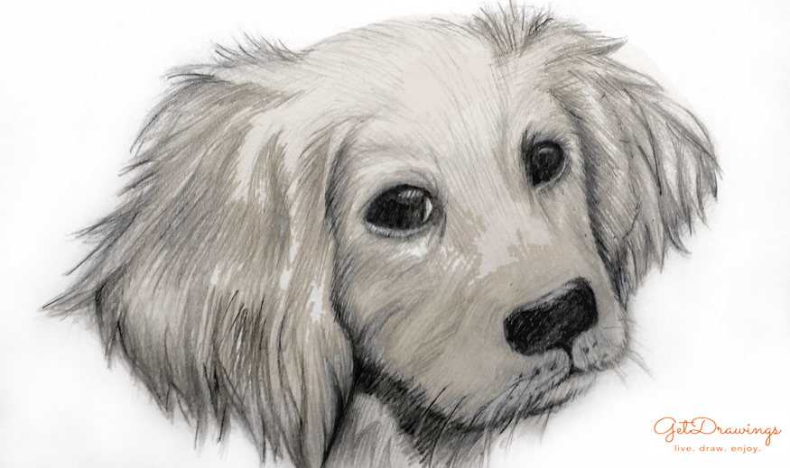 How to draw a Dog?