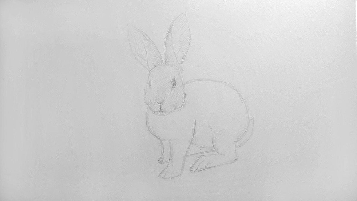 How to draw a Rabbit?