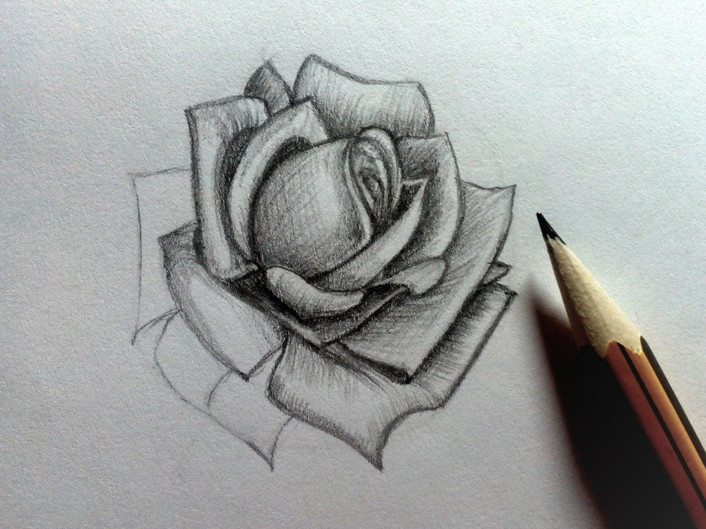 How to draw a Rose?