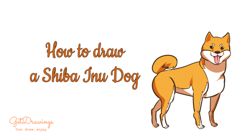How to draw a Shiba Inu dog?