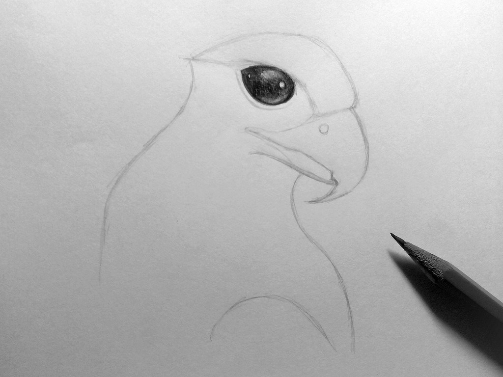 How to draw an Eagle?