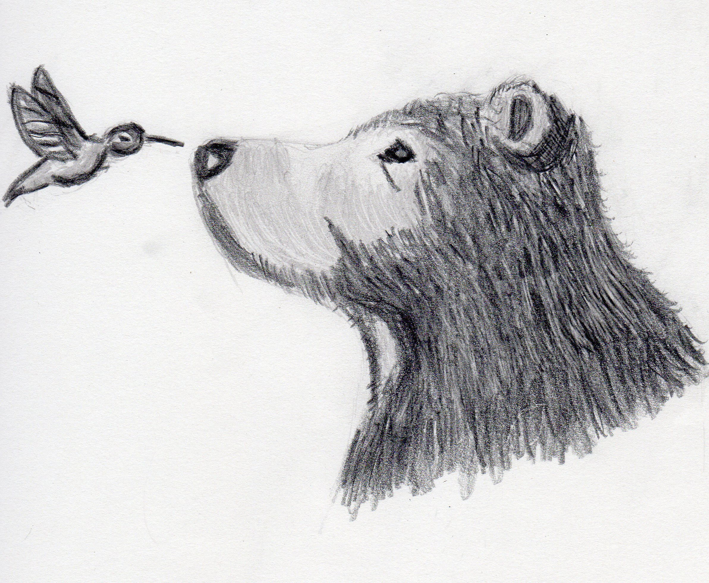 Bear And Bird Drawing