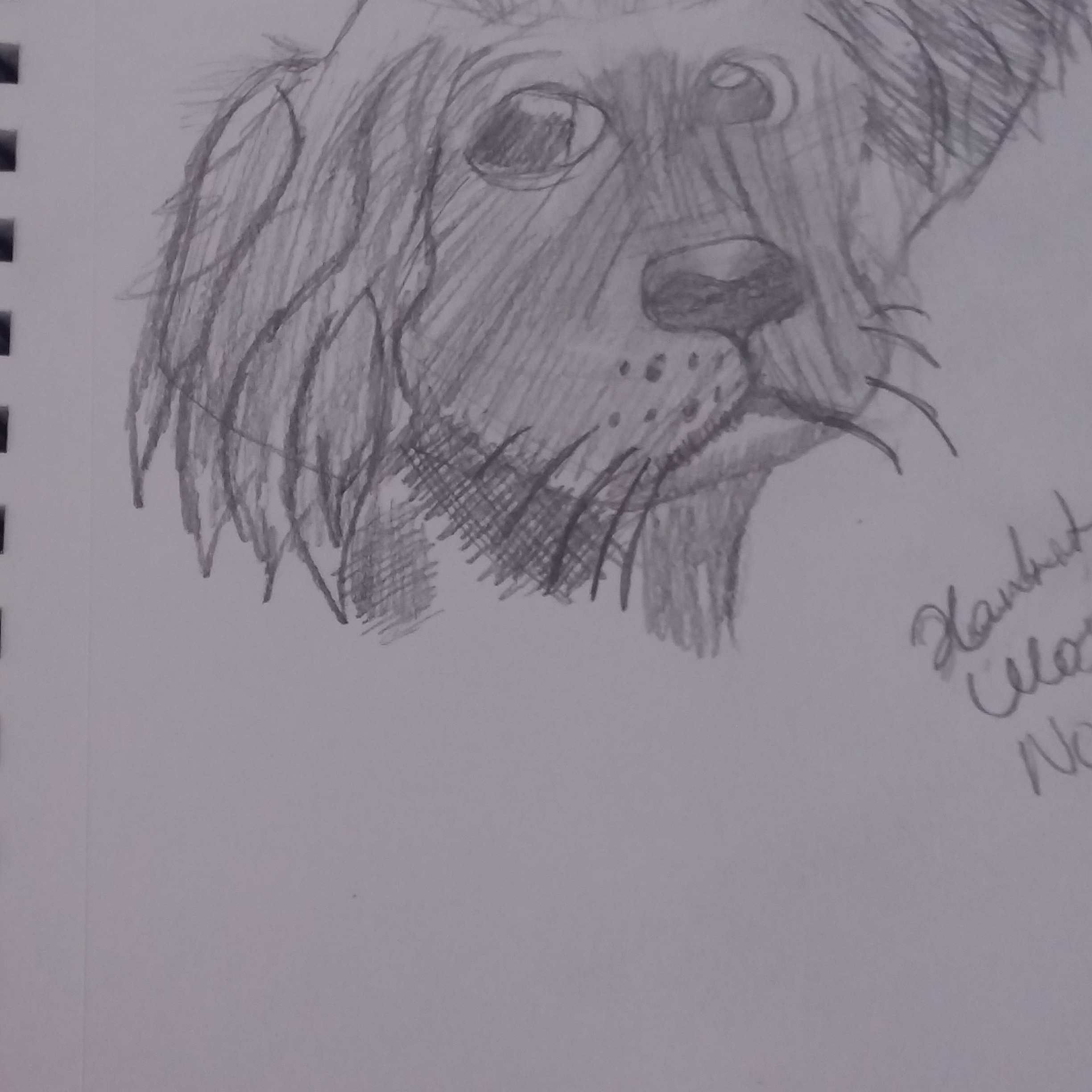 Dog sketch I did.