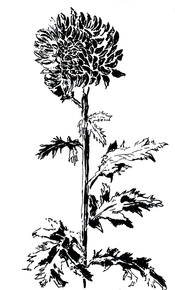 Drawings Of Flowers Draw A Flower
