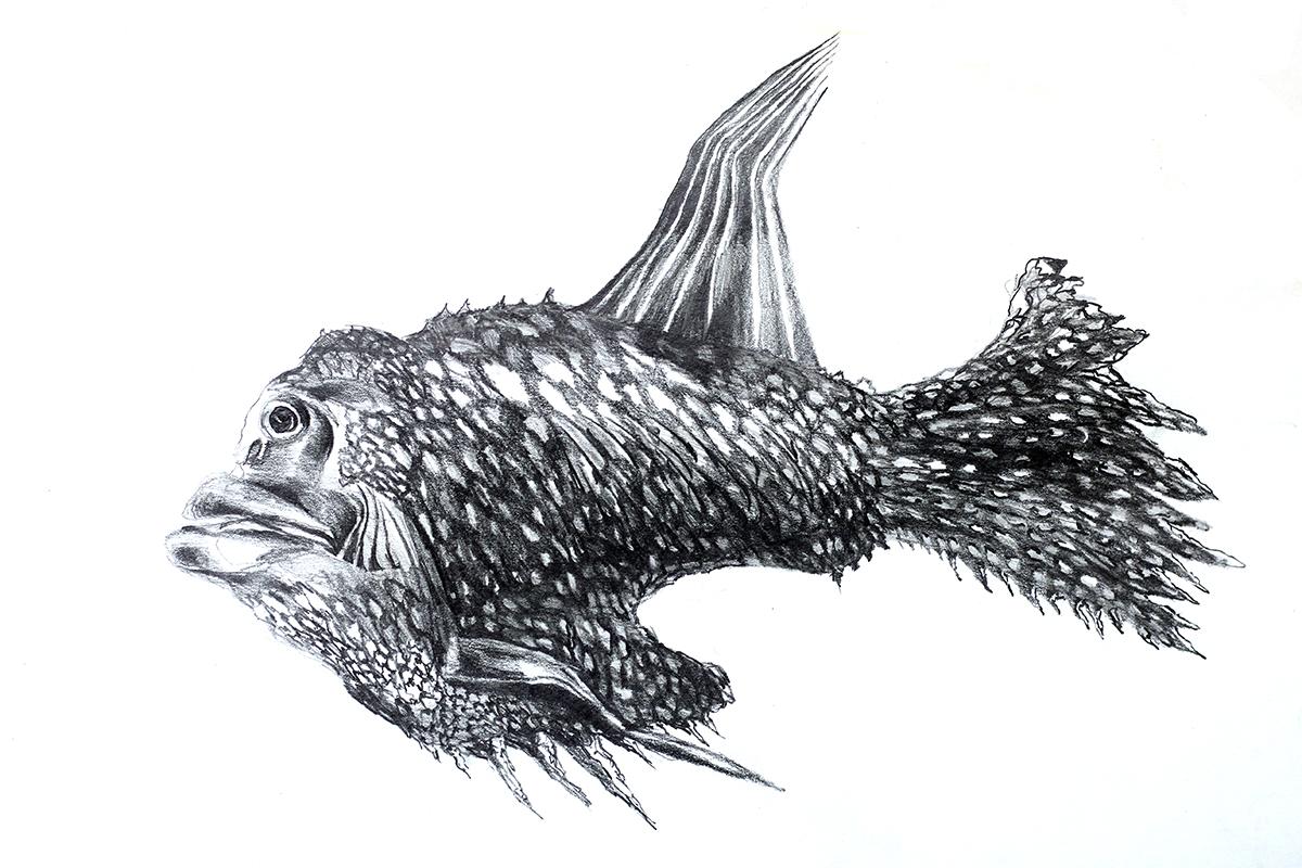 Fish Drawing Raphael Perez