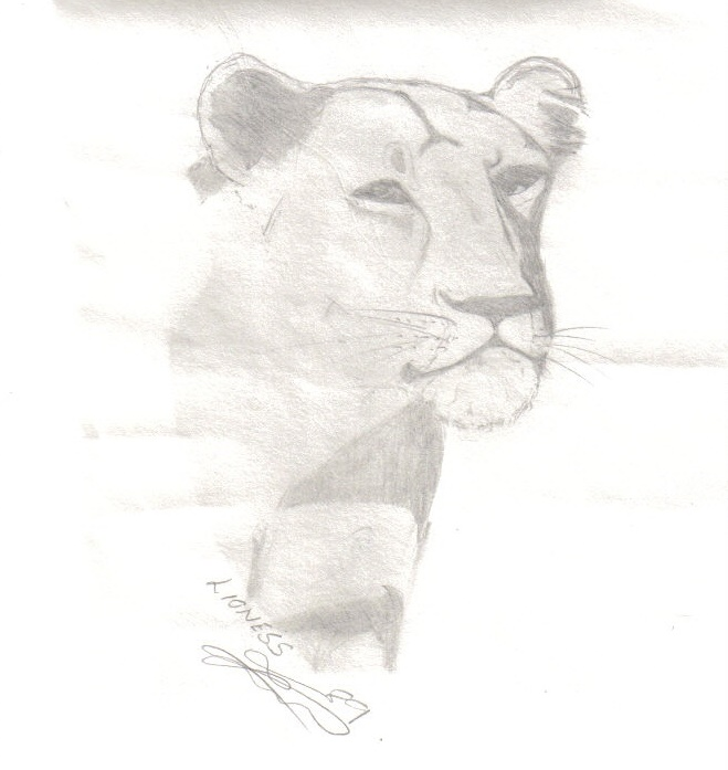 A sketch of a lioness
