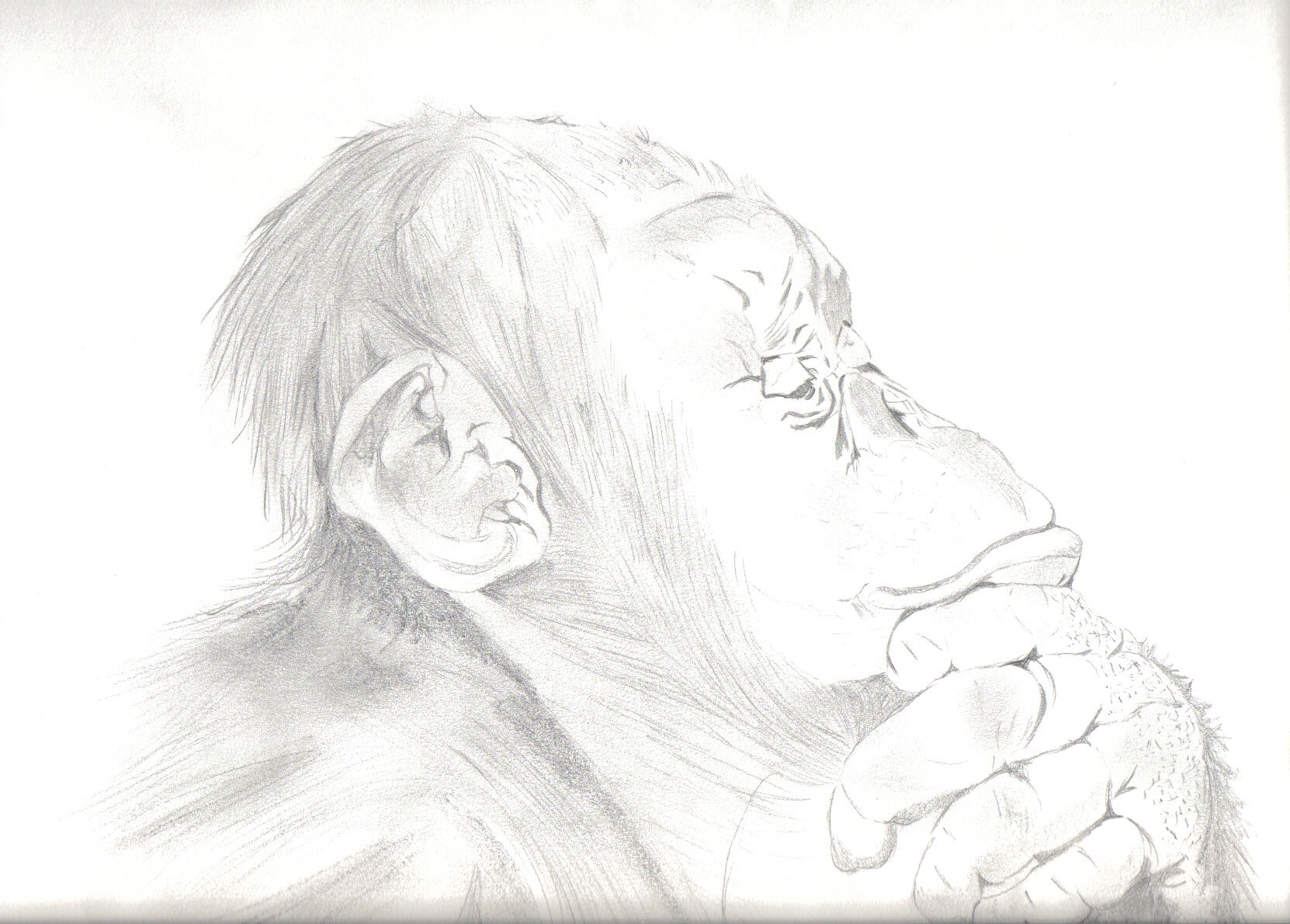 A sketch of a chimpanzee thinking