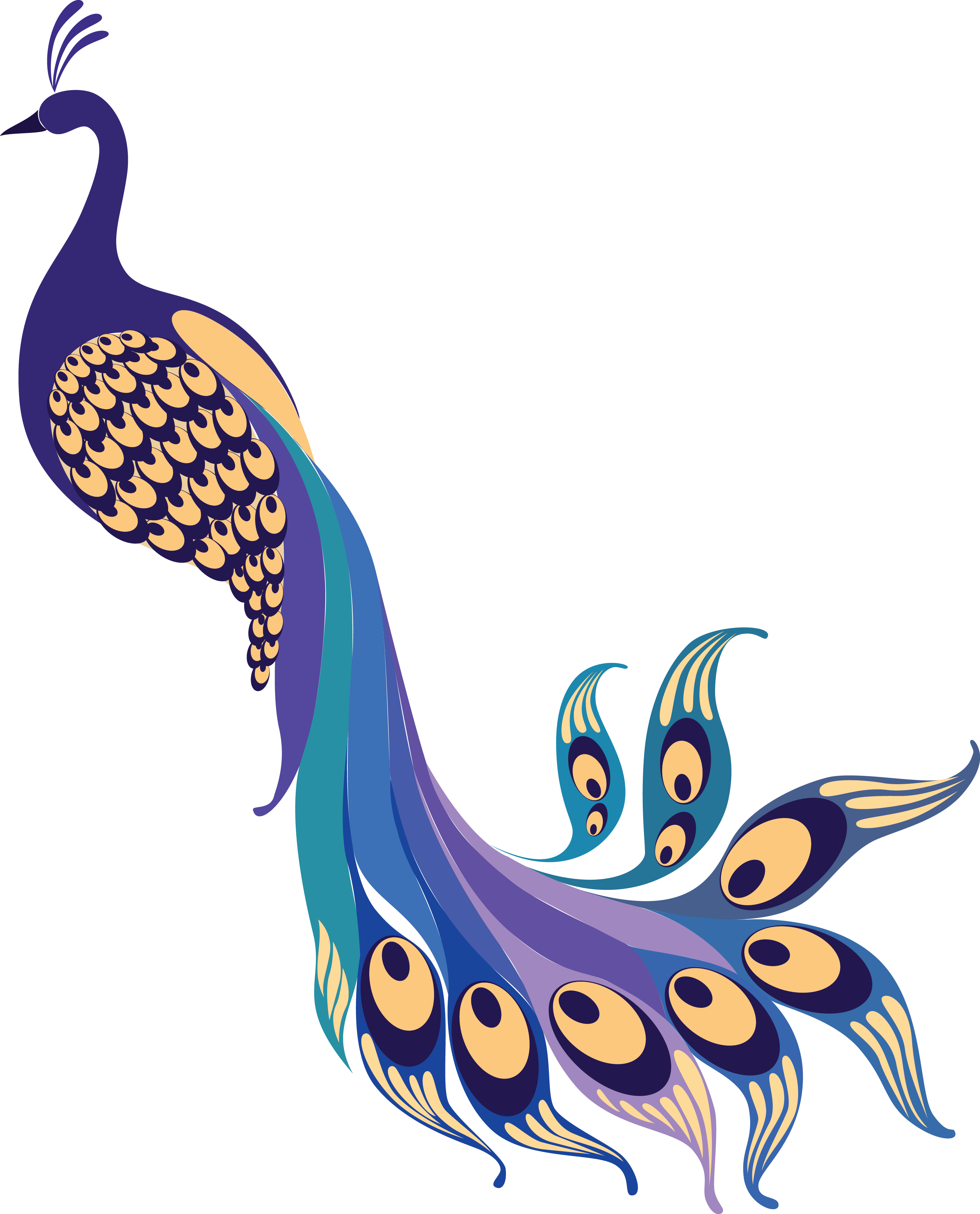 Peacock Png Clipart