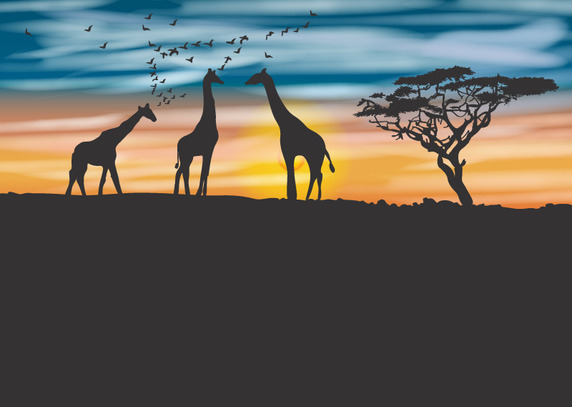 572x407 Acacia Tree And Giraffe Background Vector Free Vector Download