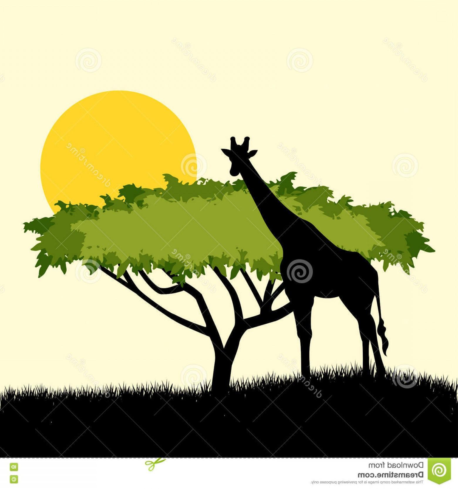 1560x1668 Stock Illustration Acacia Tree Giraffe Silhouette Concept Design