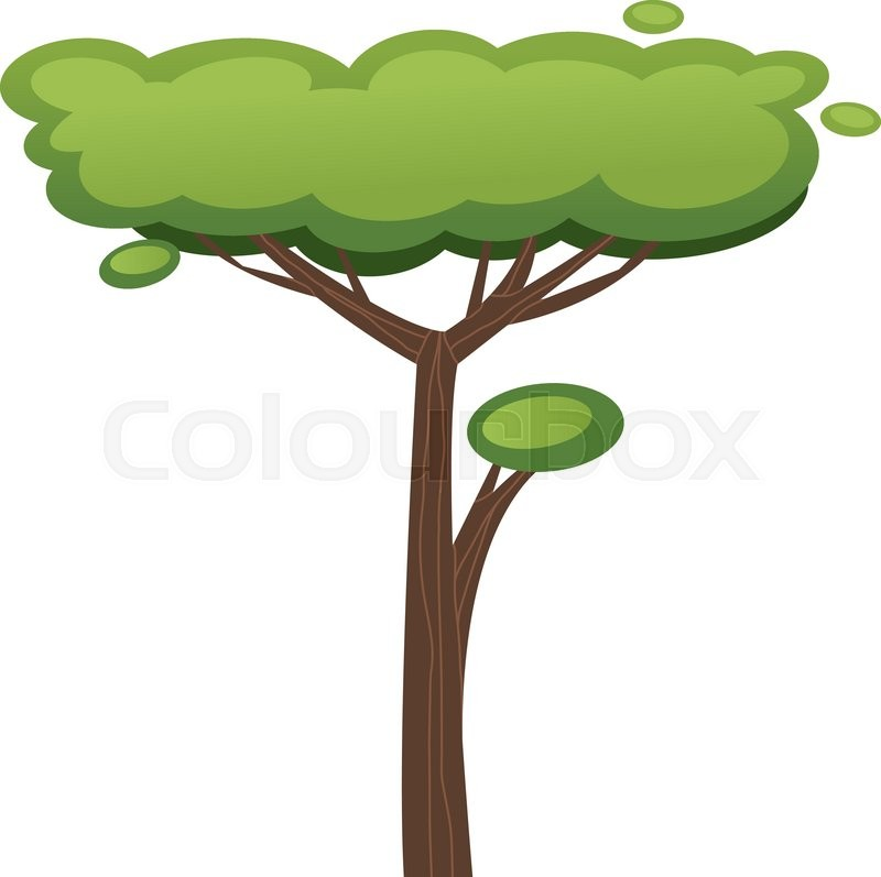 800x797 African Tree Vector Illustration. African Tree Isolated On White