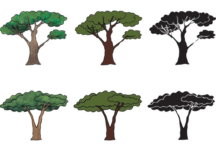 700x490 Free Acacia Tree Vector Series 115844