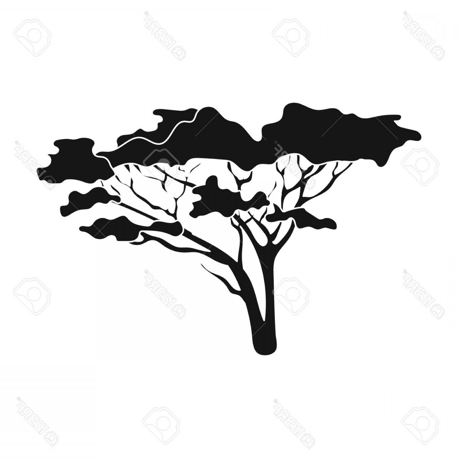 1560x1560 Photostock Vector Tree In The Savannah African Safari Single Icon