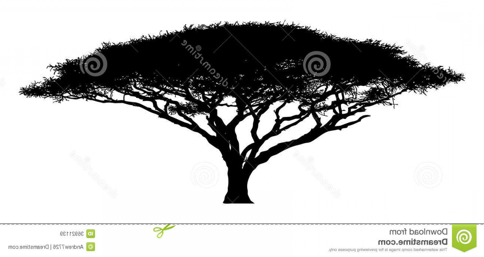 1560x828 Royalty Free Stock Images Silhouette Tree Acacia Wood African