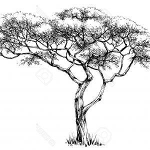 300x300 Vector Line Drawing Of Flowers Pine Trees Snow Lazttweet