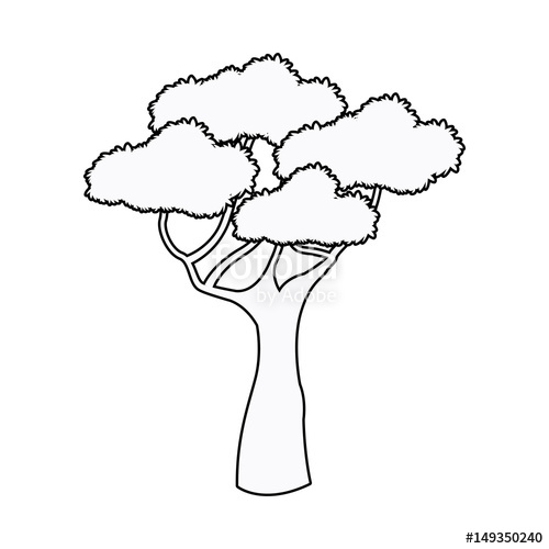 500x500 African Tree High Plant Natural Botanical Outline Vector