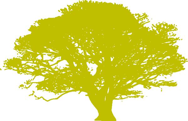 600x386 African Tree