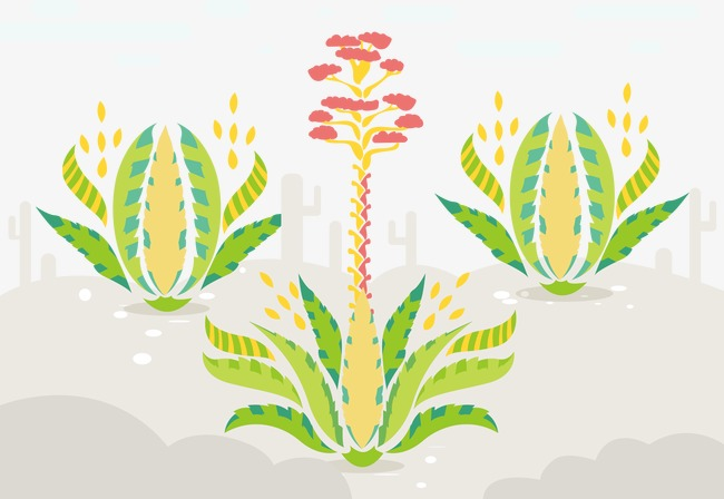 650x448 Agave Vector Illustration, Agave, Plant, Vector Png And Vector For