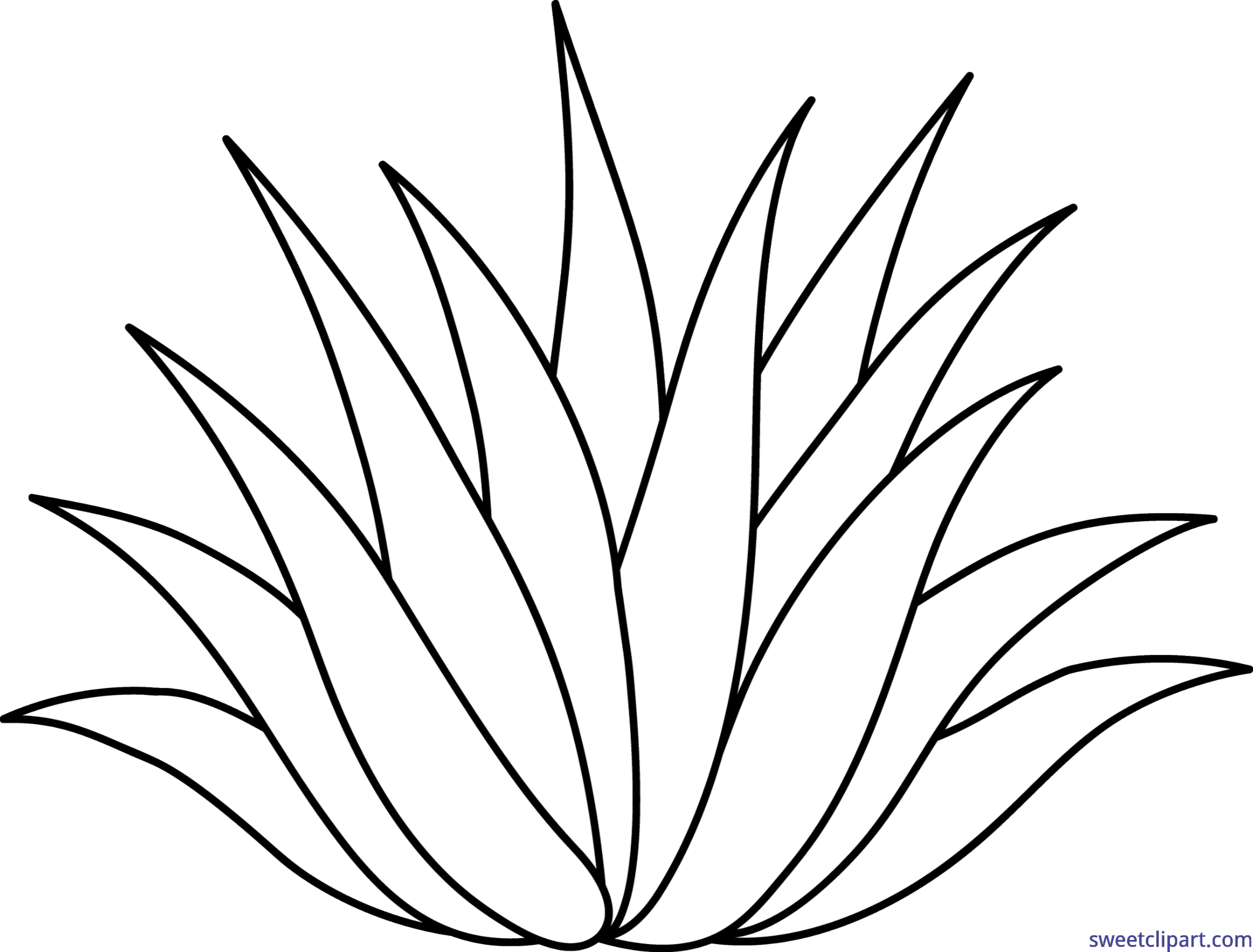 6303x4790 19 Agave Vector Art Huge Freebie! Download For Powerpoint