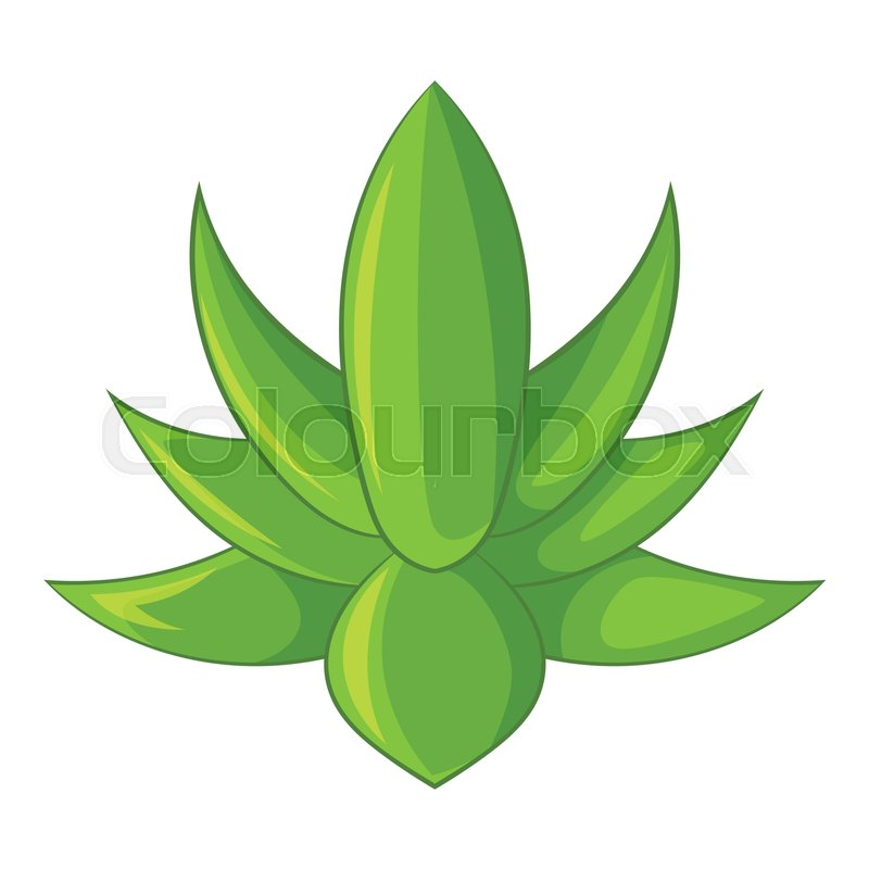 800x800 Big Agave Icon. Cartoon Illustration Of Big Agave Vector Icon For