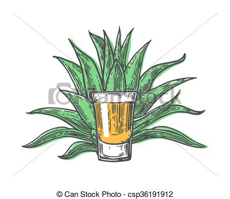 450x389 Cactus Blue Agave With Glass Tequila. Vintage Vector Engraving