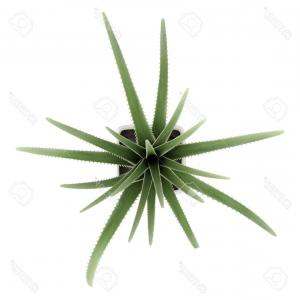 300x300 Photostock Vector Agave Plant Green Flower Logo Colorful Vector