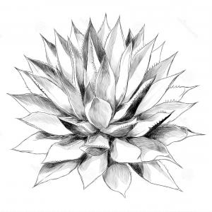 300x300 Stock Illustration Bush Agave Sketch Vector Graphics Red Top View