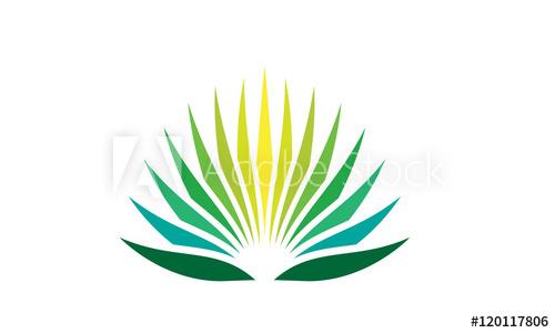 500x300 Agave Plant Logo