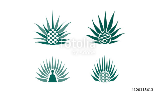 500x300 Agave Plant Logo Stock Image And Royalty Free Vector Files On