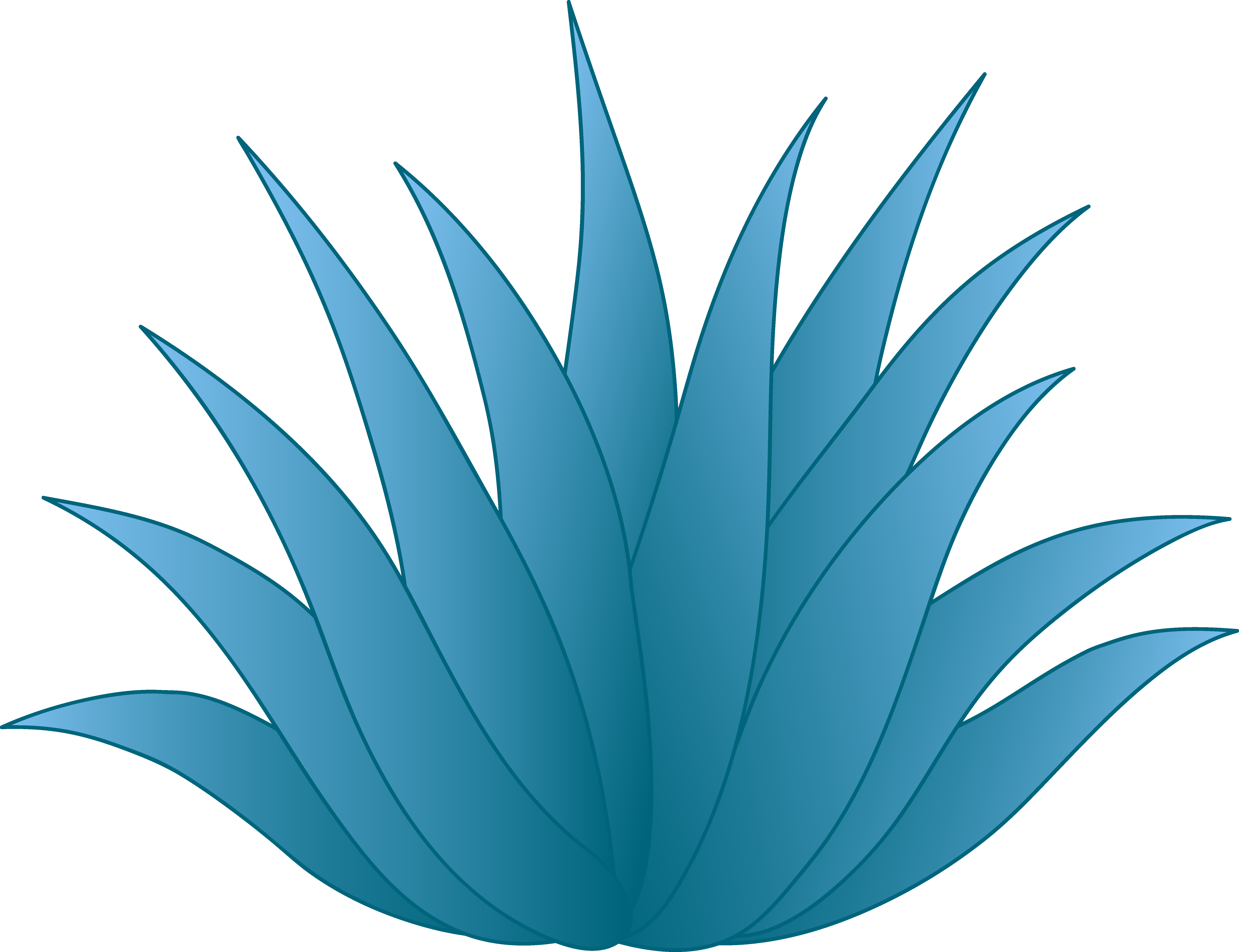 6502x4998 Collection Of Agave Plant Drawing High Quality, Free