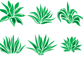 352x247 Agave And Maguey Drawings Free Vector Download 369115 Cannypic