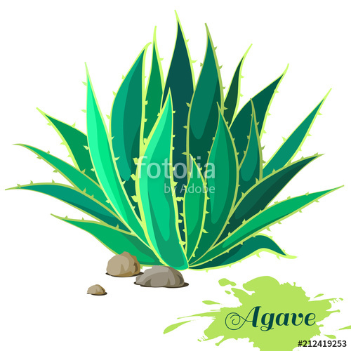 500x500 Agave Image. Vector Illustration. Stock Image And Royalty Free