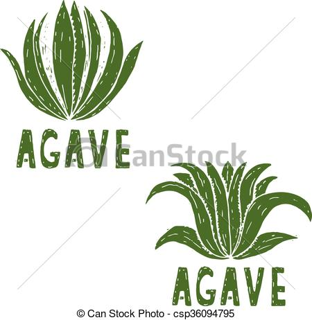 450x462 Hand Drawn Illustration Template Of Agave.vector.