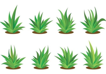352x247 Maguey Illustration Vector Free Vector Download 385833 Cannypic