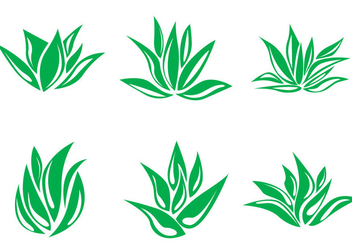 352x247 Maguey Vector Free Vector Download 391671 Cannypic