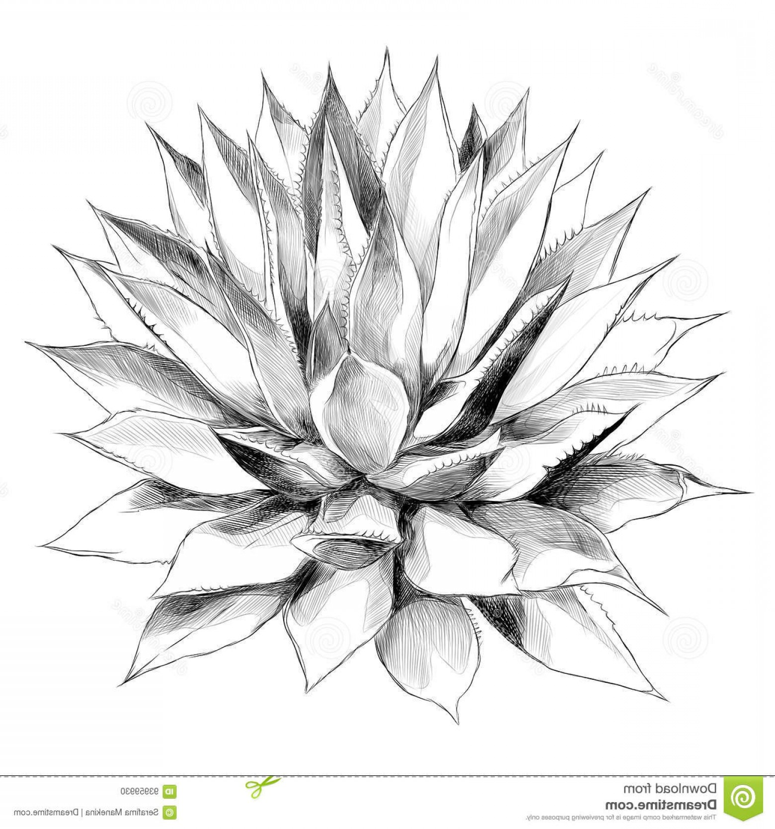 1560x1668 Stock Illustration Bush Agave Sketch Vector Graphics Red Top View