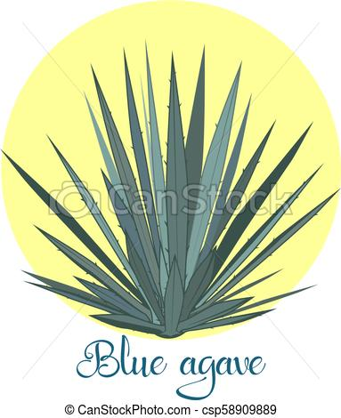 383x470 Tequila Agave Or Blue Agave Vector Illustration. Tequila Agave