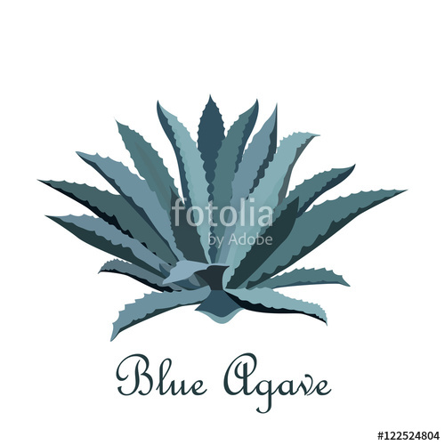500x500 Tequila Blue Agave. Realistic Vector Illustration For Label
