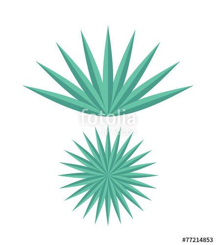 441x500 Agave Stock Image And Royalty Free Vector Files On