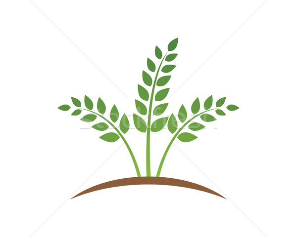 600x480 Agriculture Logo Vector Illustration Dar Woto (Ggs) ( 6414413