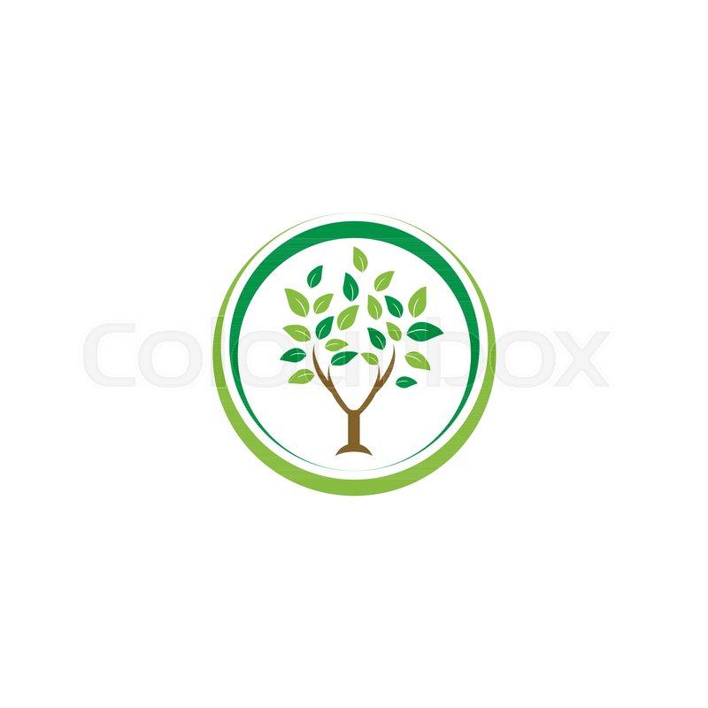 800x800 Elegant Circle Tree Leaf Agriculture Logo Design Template Vector