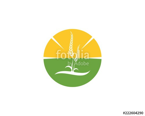 500x400 Wheat Rice Agriculture Logo Vector Template Stock Image And