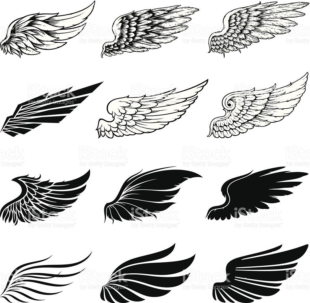 1024x999 Set Of Twelve Vector Wings. The Collection Includes A Simple Form