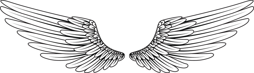 1000x288 Wings Vector Element Royalty Free Stock Image