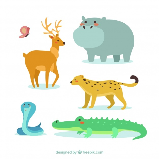 626x626 Crocodile Vectors, Photos And Psd Files Free Download