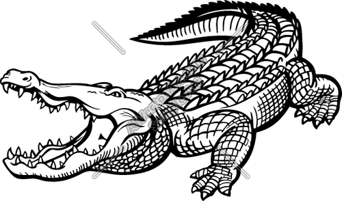 500x294 Gator09v4bw Clipart And Vectorart Animals